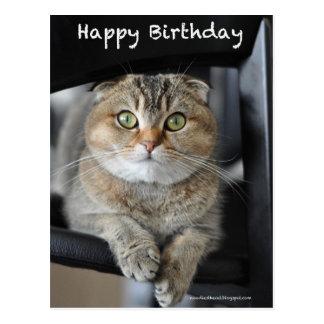 postal linda del cumpleaños del gato de los tallar
