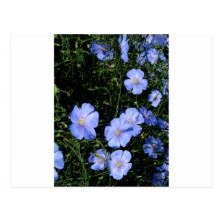 Postal Lino en la floración