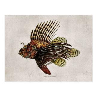 Postal Lionfish del vintage