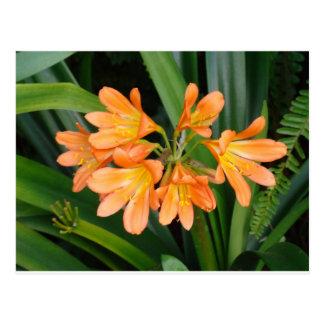 Postal Lirio anaranjado con las floraciones múltiples