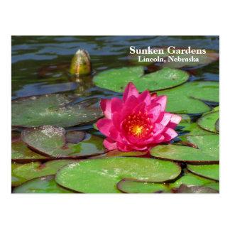 Postal Lirio de agua del rosa de jardines hundidos #91