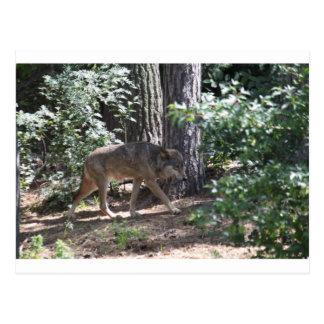 Postal Lobo de madera