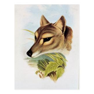 Postal Lobo o tigre tasmano