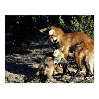 Postal Lobos crinados, pares acoplados