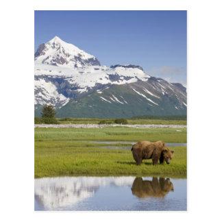 Postal Los E.E.U.U., Alaska, parque nacional de Katmai,
