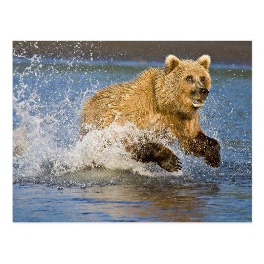 Postal LOS E.E.U.U. Alaska. Pesca costera del oso de
