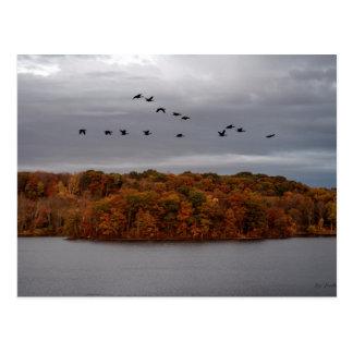 Postal Los gansos del otoño
