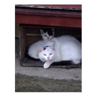 Postal Los gatos irlandeses tardan a ShelterOn al día