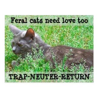 Postal Los gatos salvajes necesitan el amor - TNR