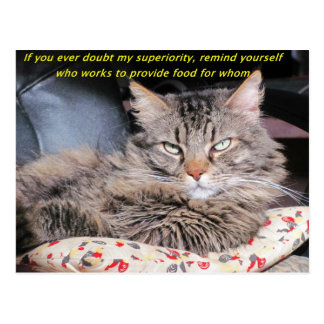 Postal Los gatos son Meme superior