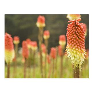 Postal Los jardines botánicos de los acres de la orilla