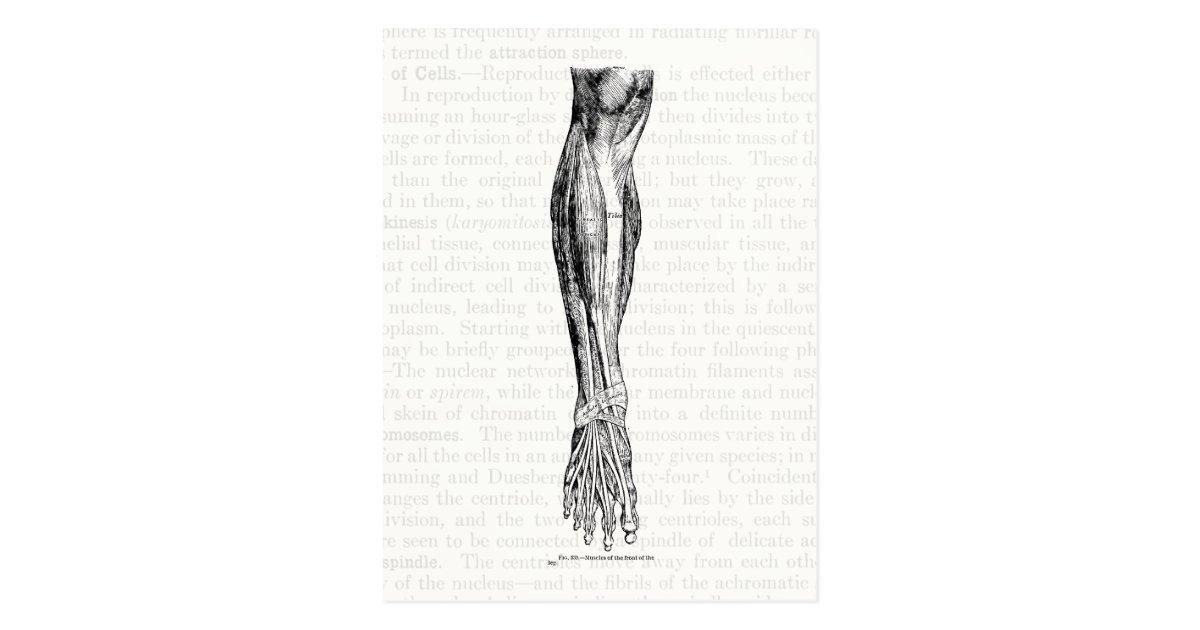 Vistoso Dibujos De Anatomía Grises Foto - Páginas Para Colorear ...