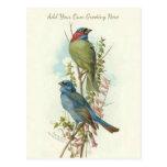 Postal Los pájaros hermosos del vintage añaden su propio