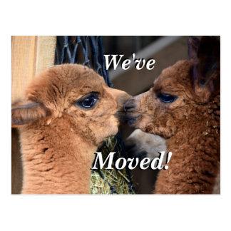 Postal Los pares de la alpaca hemos movido la nueva