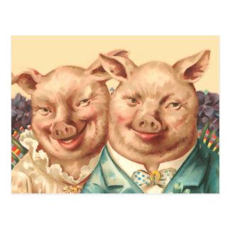 Postal Los pares hermosos del cerdo