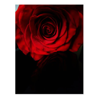 Postal Los rosas son rojos….