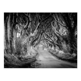 Postal Los setos de la oscuridad en Black&White