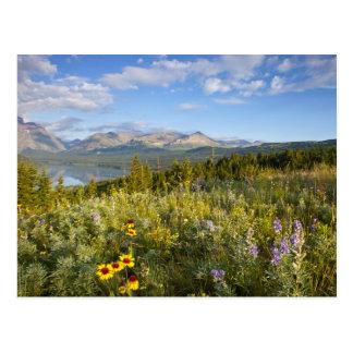 Postal Los wildflowers de la pradera y bajan el lago dos