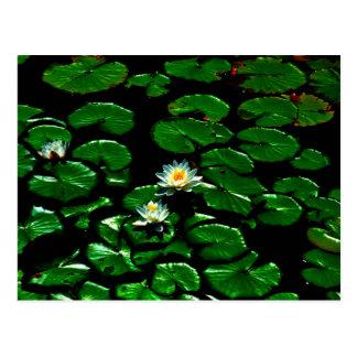 Postal Lotus