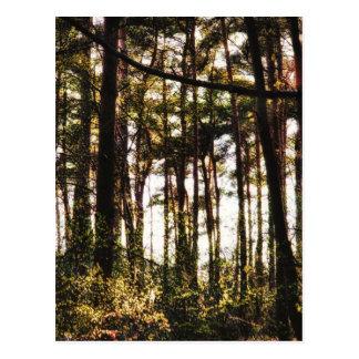 Postal Luz a través de los árboles forestales