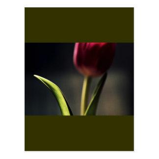 Postal Luz del Viejo Mundo, tronco del tulipán,