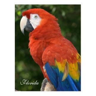 Postal Macaw
