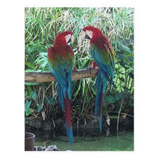 Postal Macaws