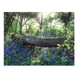 Postal Madera amarilla del Bluebell, madera del parque de