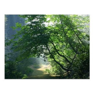 Postal Maderas de los bosques de los rastros de las