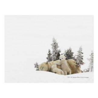 Postal Madre del oso polar y su Cubs en el parque de