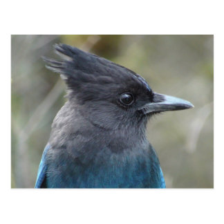 Postal Mamá Blue Postcard