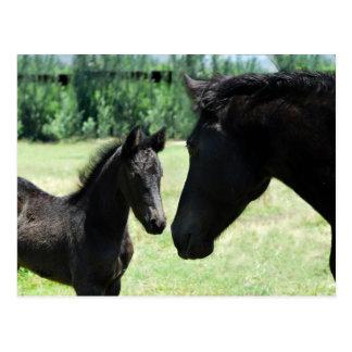 Postal Mamá y bebé del amor del caballo