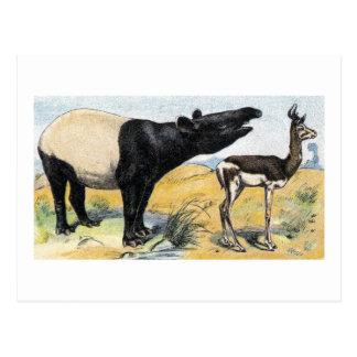 Postal Mamíferos:  tapir y gazelle