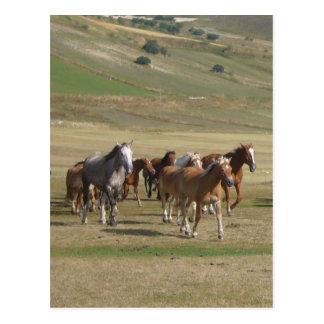 Postal Manada de caballos