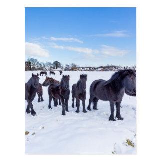 Postal Manada de los caballos negros del frisian en nieve