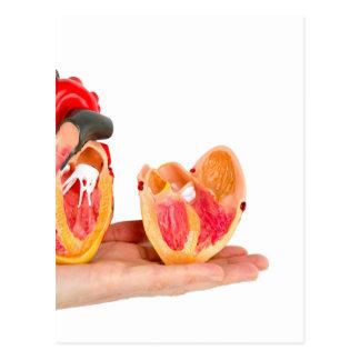 Postal Mano con el modelo humano del corazón en