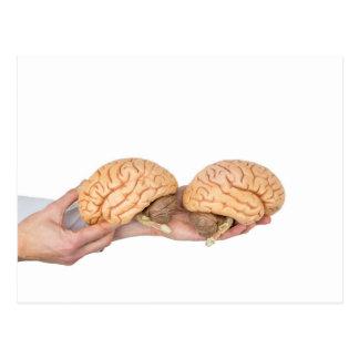 Postal Manos que sostienen el cerebro humano modelo en