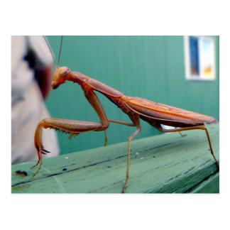 Postal Mantis religiosa y hormiga