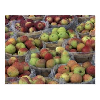 Postal Manzanas de Macintosh del Estado de Nuevo York en