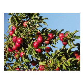 Postal Manzanas de Mack