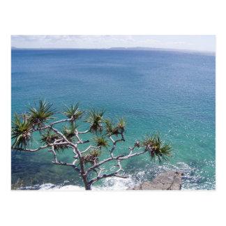 Postal Mar claro hermoso del Pandanus