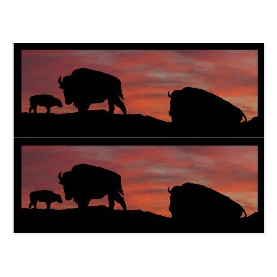 Postal Marcadores de libro del bisonte