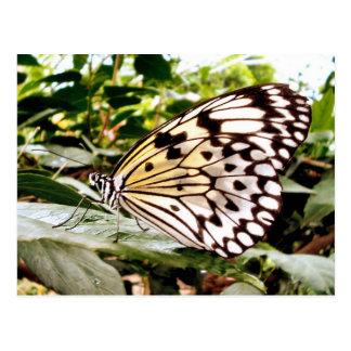 Postal Mariposa