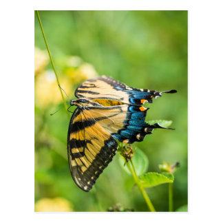 Postal Mariposa amarilla hermosa