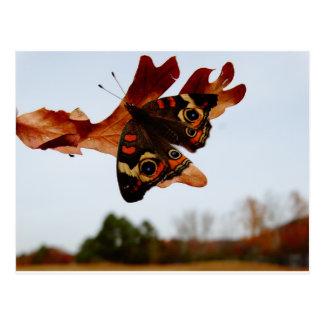 Postal mariposa anaranjada con los puntos azules