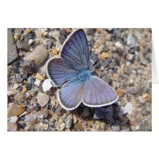 Postal mariposa azul: Bläuling, en blanco Tarjeta De Felicitación