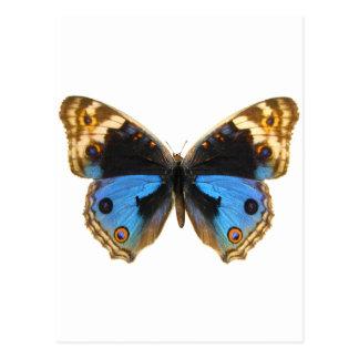 Postal Mariposa azul del pensamiento