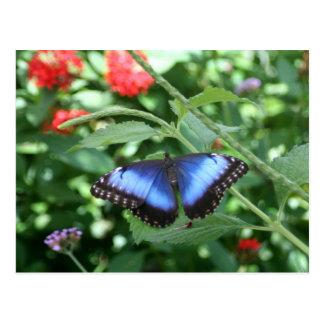 Postal Mariposa azul grande 2