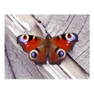 Postal mariposa brillante