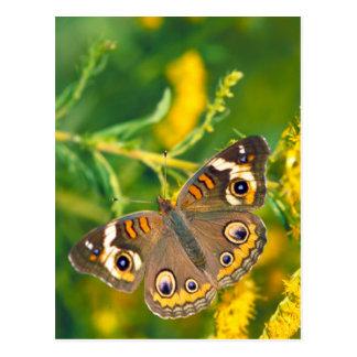 Postal Mariposa común del castaño de Indias en vara de
